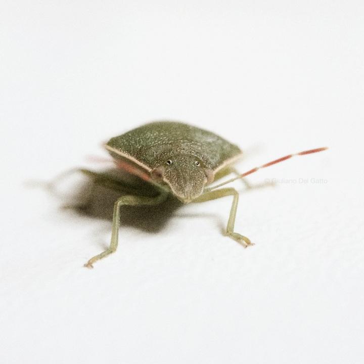 02-insetti-g-delgatto_1000