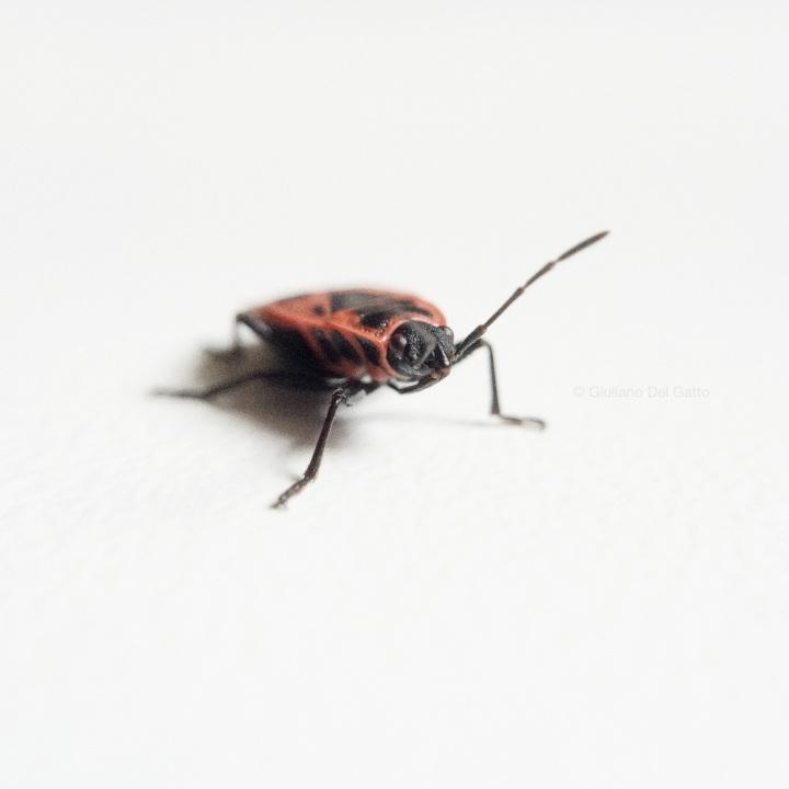 03-insetti-g-delgatto_1000