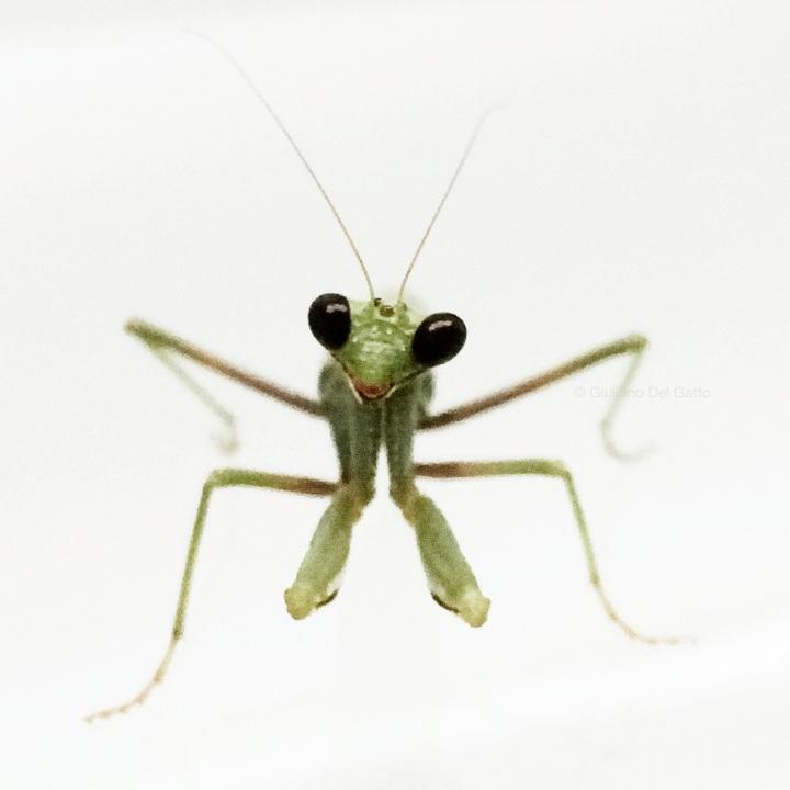 06-insetti-g-delgatto_1000