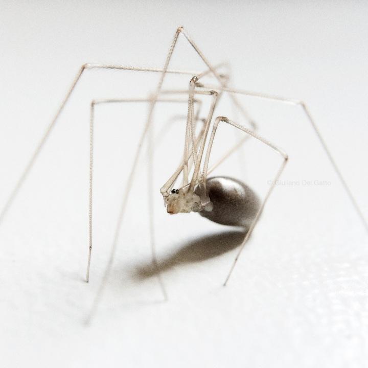 08-insetti-g-delgatto_1000
