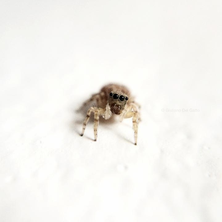 12-insetti-g-delgatto_1000