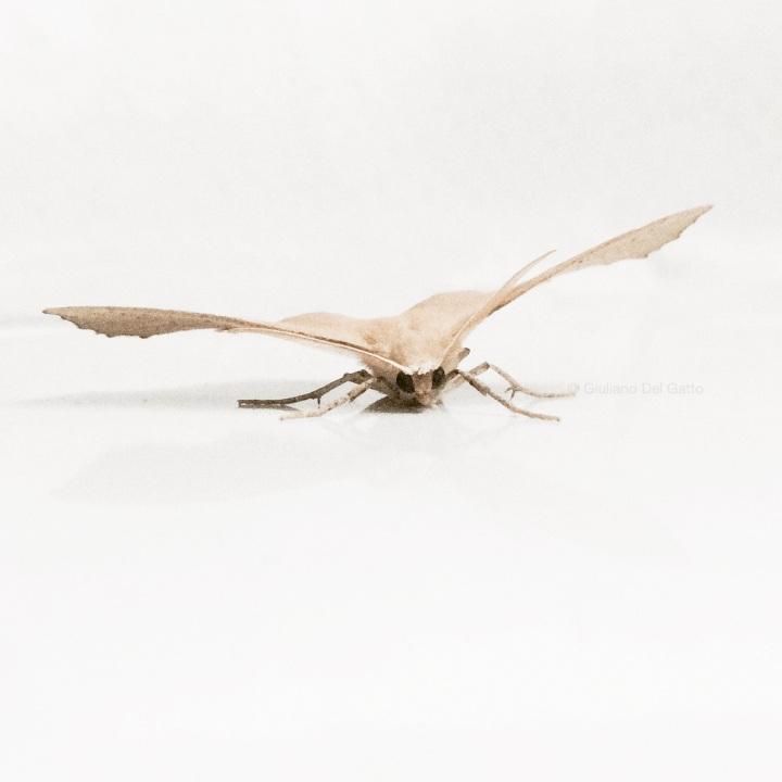 18-insetti-g-delgatto_1000