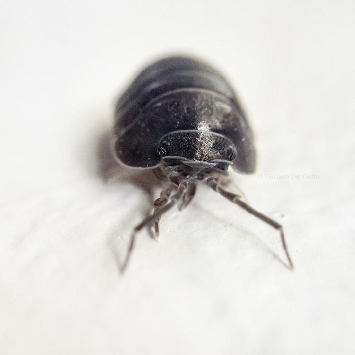 20-insetti-g-delgatto_1000