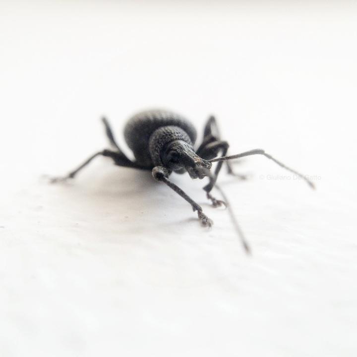 22-insetti-g-delgatto_1000
