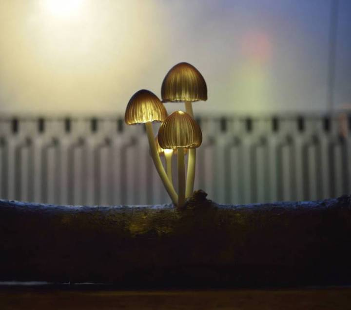 mushroom-lamps-yukio-takano-17