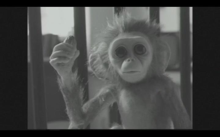 monkey-love2