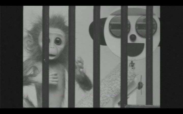monkey-love4