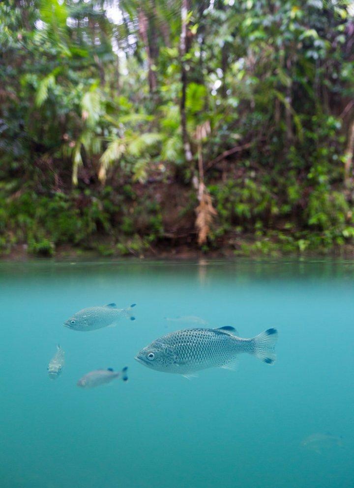Jem_Cresswell_Underwater_Photographer_Sydney_Australia_Nature_Wildlife_013.jpg