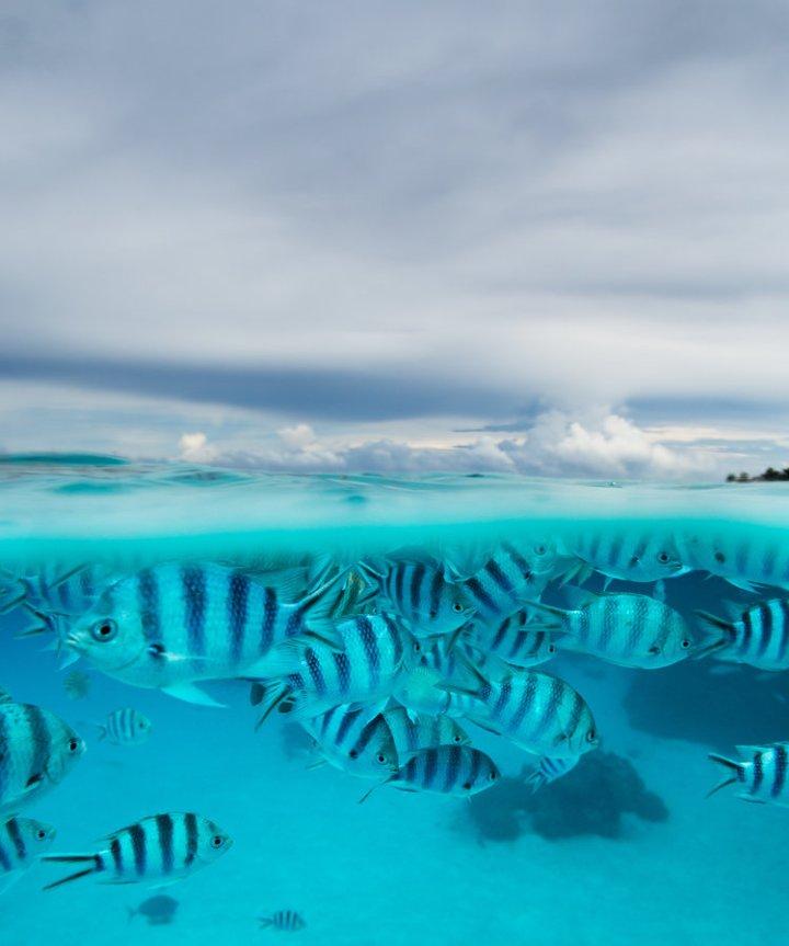 Jem_Cresswell_Underwater_Photographer_Sydney_Australia_Nature_Wildlife_012.jpg