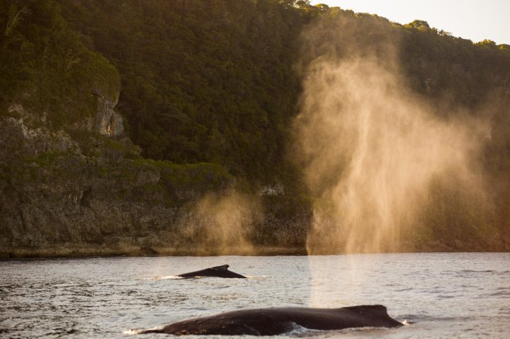 Jem_Cresswell_Underwater_Photographer_Sydney_Australia_Nature_Wildlife_001.jpg