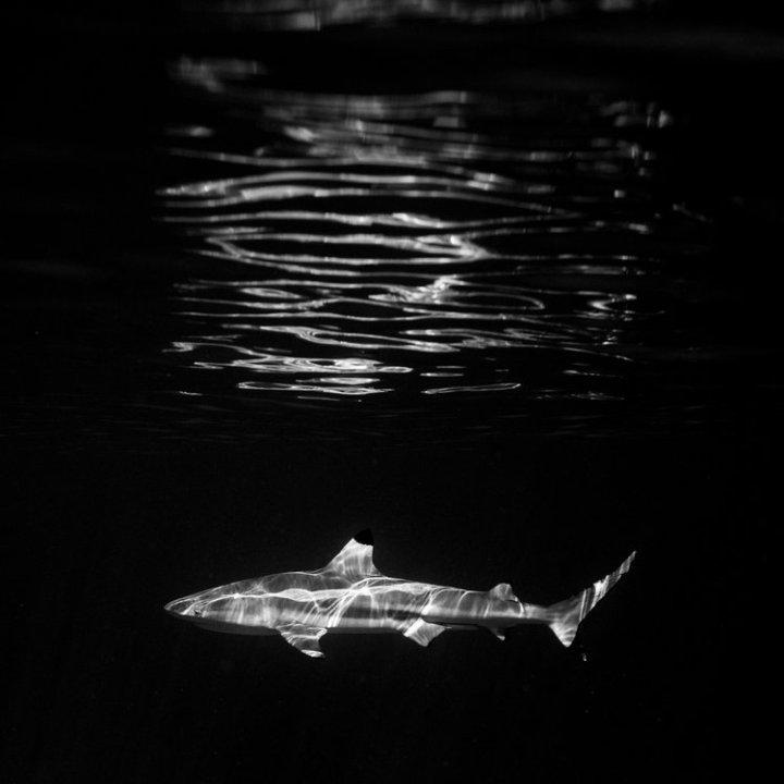 Jem_Cresswell_Underwater_Photographer_Sydney_Australia_Nature_Wildlife_009.jpg