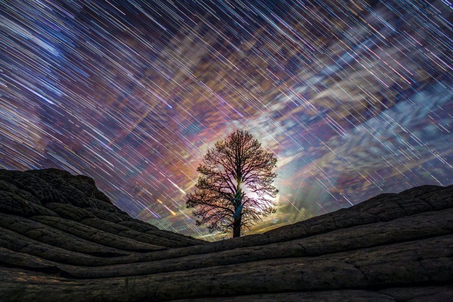https://babylonburningmediacenter.files.wordpress.com/2017/05/38cbd-tree-of-life-final.jpg?w=934&h=623
