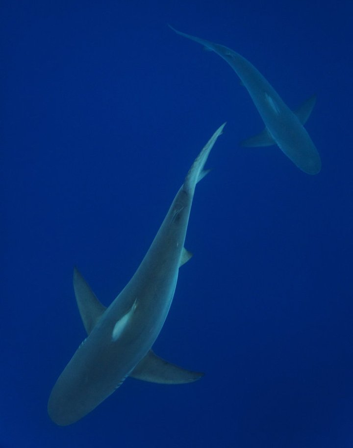 Jem_Cresswell_Underwater_Photographer_Sydney_Australia_Nature_Wildlife_006.jpg