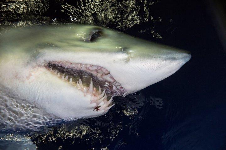 Jem_Cresswell_Underwater_Photographer_Sydney_Australia_Nature_Wildlife_003.jpg