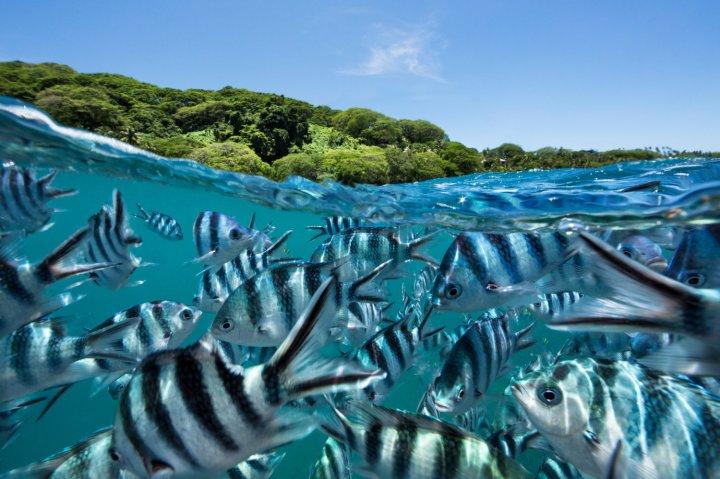 Jem_Cresswell_Underwater_Photographer_Sydney_Australia_Nature_Wildlife_014.jpg