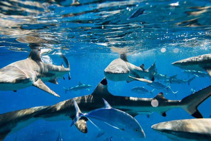 Jem_Cresswell_Underwater_Photographer_Sydney_Australia_Nature_Wildlife_005.jpg