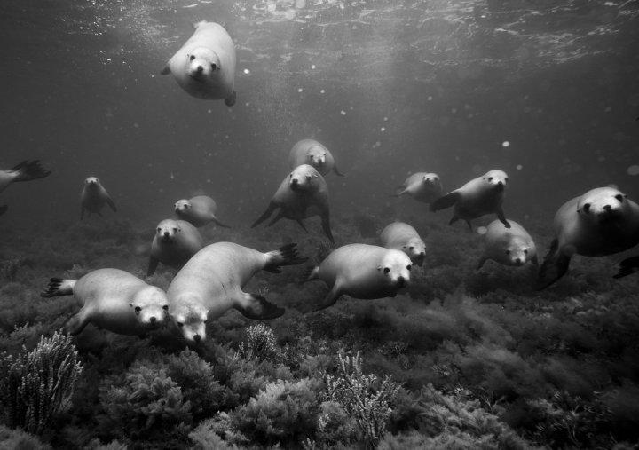 Jem_Cresswell_Underwater_Photographer_Sydney_Australia_Nature_Wildlife_026.jpg