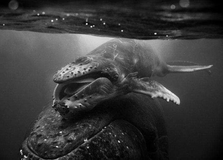 Jem_Cresswell_Underwater_Photographer_Sydney_Australia_Nature_Wildlife_008.jpg