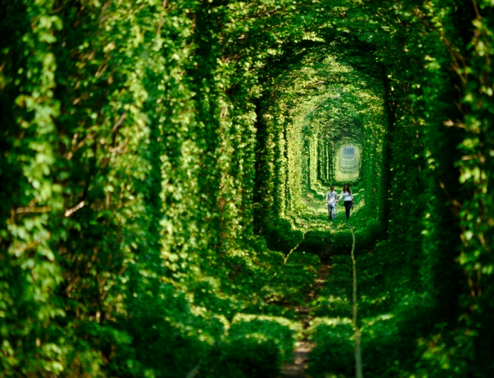 """A local couple walk through the """"Tunnel of Love"""" in Ukraine. A train runs through the tunnelthrice daily, delivering wood to a nearbyfactory & keeping the tunnel tightly trimmed. Click  here  for the full gallery."""