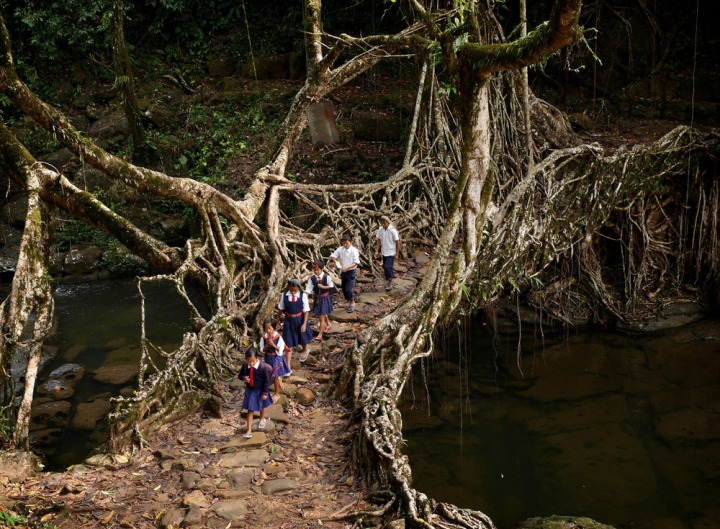 """""""En root to school"""": At around 8:30amevery weekday these friends make their way through the jungleand across an ancient tree root bridgeon their way to class. Click  here  for full story on the Meghalaya region of India."""
