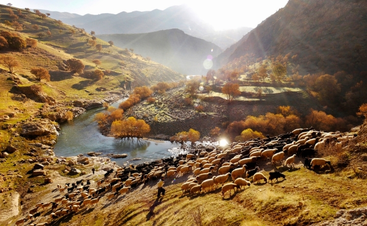 Two shepherds lead Palangan's flock  out to pasture. At first light, the lanes of Palanganvillage are busy withchildren leading their familysheep into the centre of the village. Once the flockhasgathered, theseshepherdsbegin their trek into the hills.